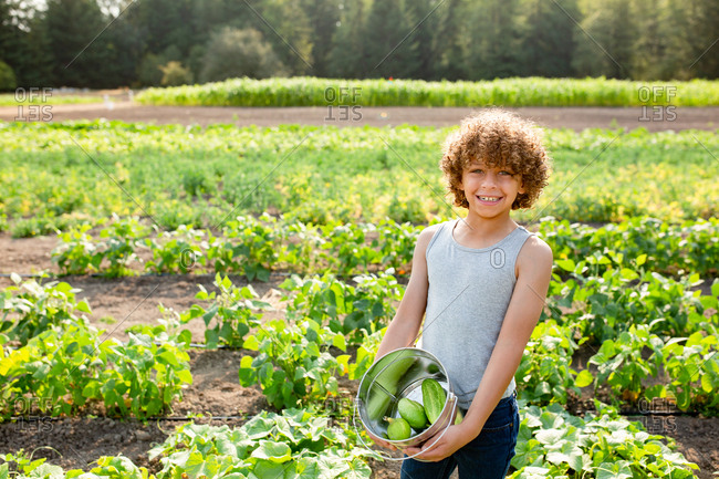 Young boy with curly hair picking cucumbers