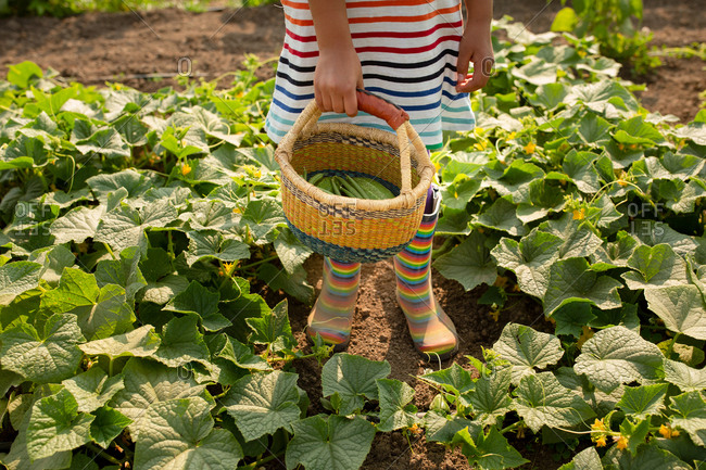 Girl wearing rainbow dress holding basket with cucumbers and green beans