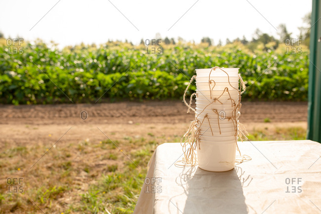 Stack of plastic bucket on a U-pick farm