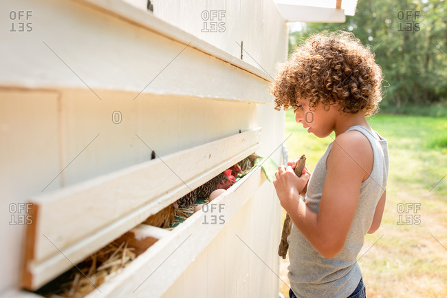 Boy looking at chicken in a coop