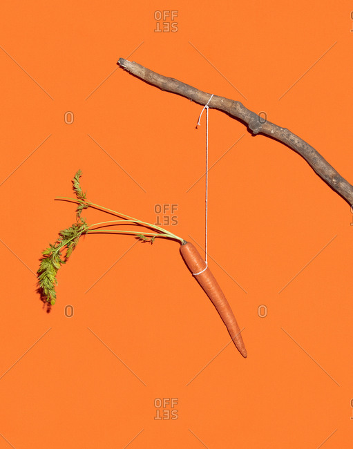 A carrot dangles from a string on a stick
