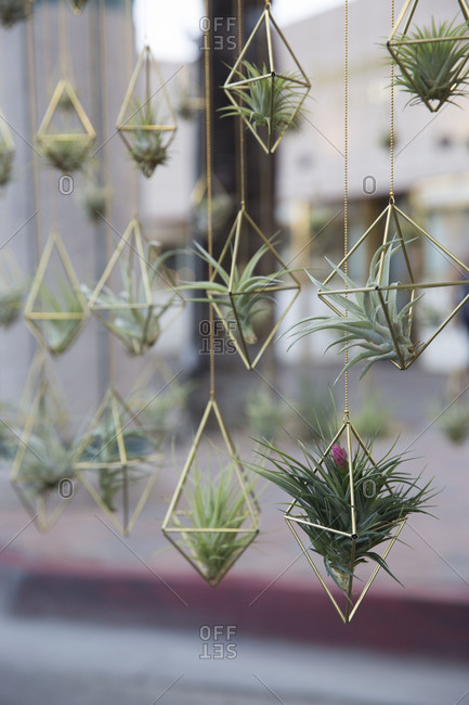 Display of air plants for sale at street market