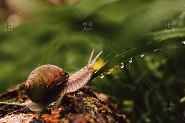 Close-up of snail on wet leaf during rainy season