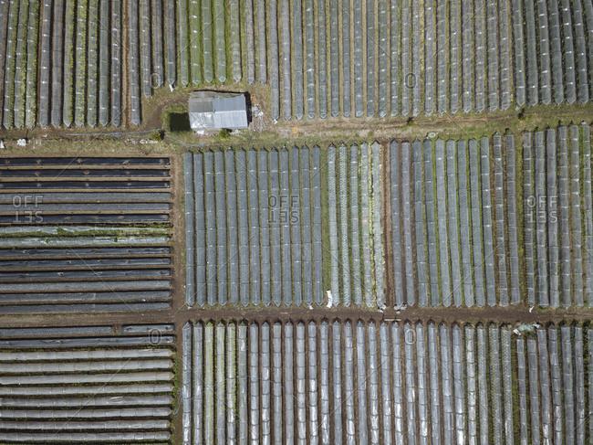 Aerial view of plant nursery