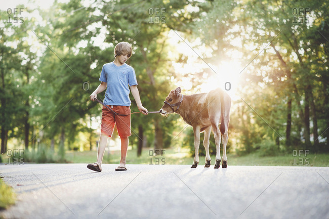 Boy with calf walking on footpath against trees at park