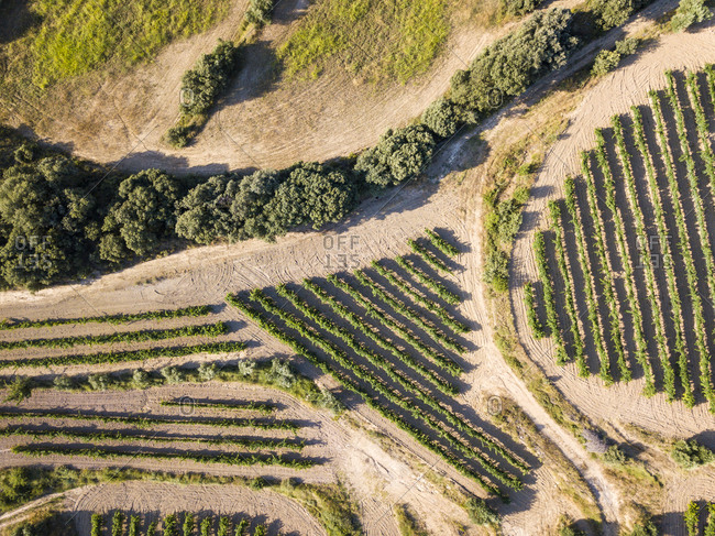Drone view of Somontano wine region in the province of Huesca in Aragon, Spain