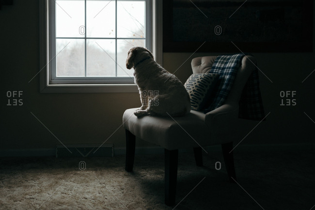 Rear view of white dog sitting on chair looking out window