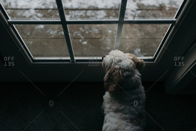 High angle view of dog looking out window during winter