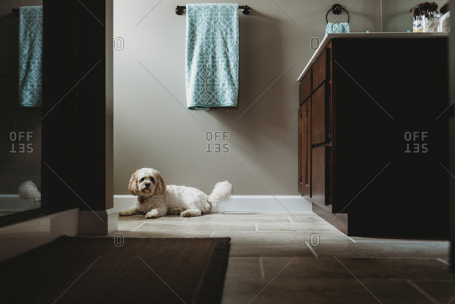 White dog on bathroom floor