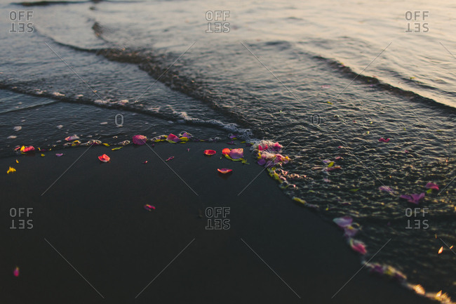 Colorful flower petals in the ocean