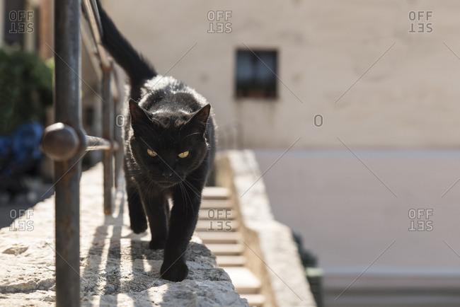 Black cat walking on stone wall