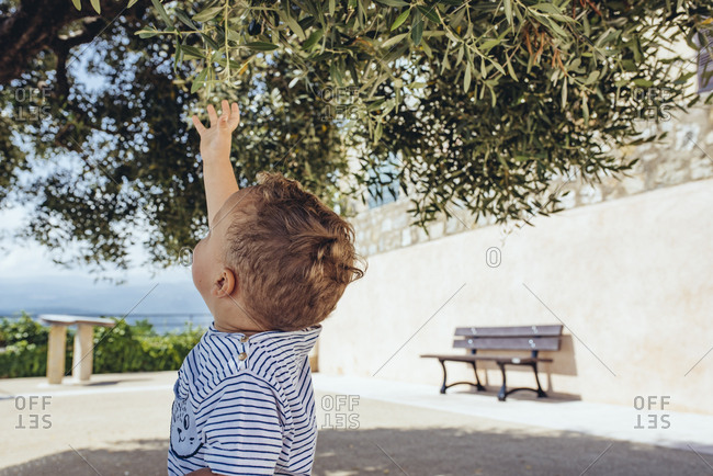 Toddler boy reaching up to leaves on a tree