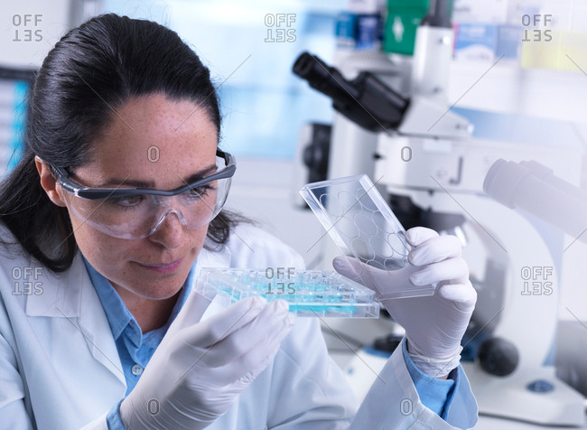 Scientist examining samples in multi well plate containing blood ready for automated testing