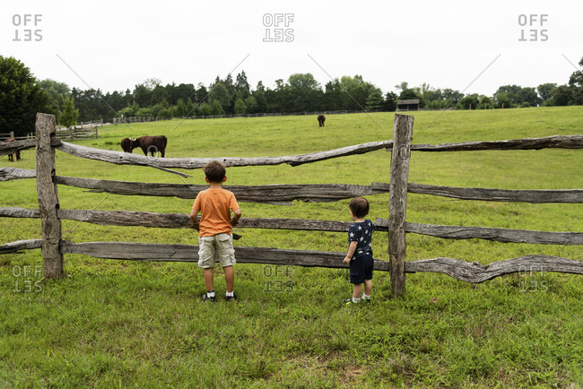 Two boys looking at cows on a farm