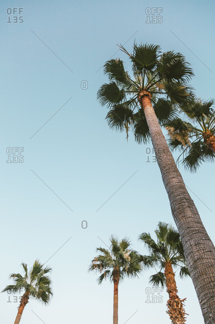 Low angle view of palms