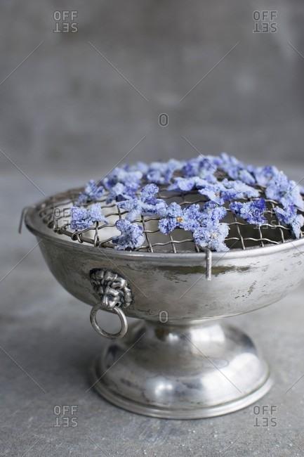 Candied violets being laid out to dry on a latticed silver bowl