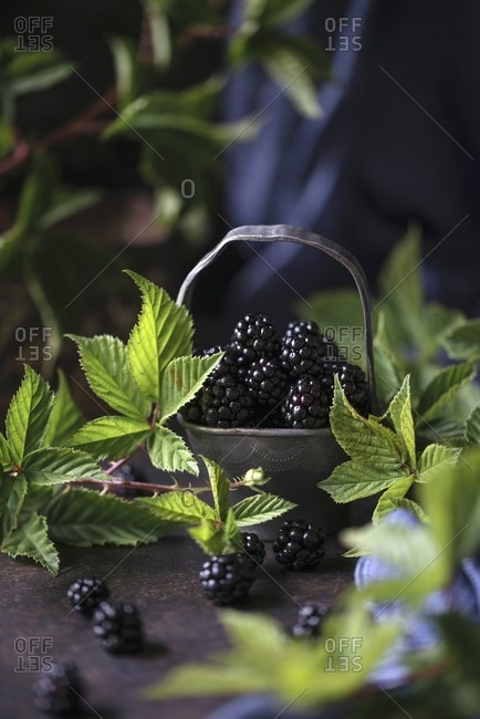Fresh blackberries with leaves