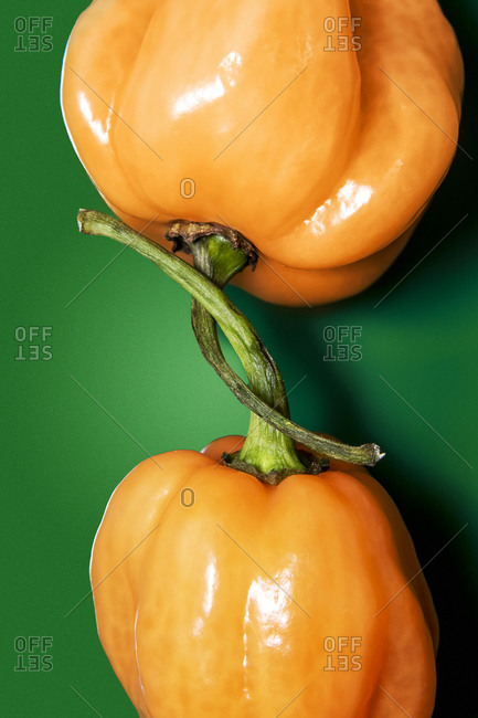Two orange habanero peppers with their stems wrapped around each other
