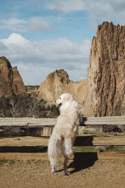 Golden Retriever at Smith Rock in Bend OR