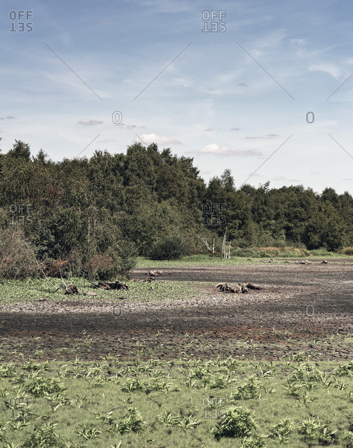 Mud drying in a field