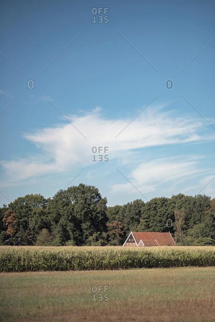 Rural building behind cornfield - Offset