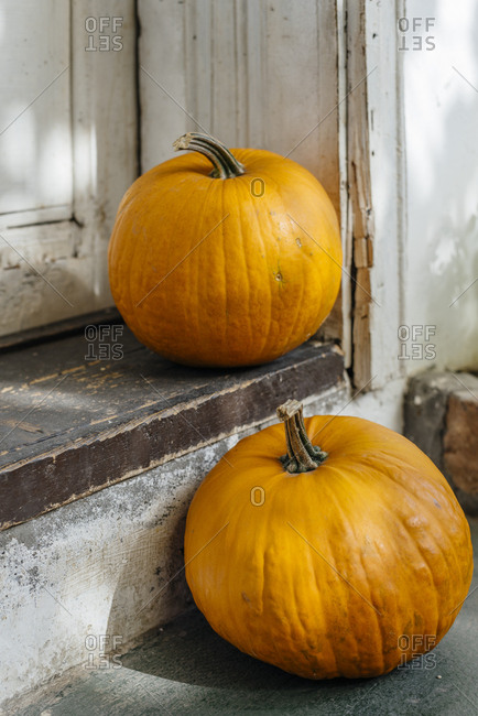 Autumn pumpkins decoration for thanksgiving and halloween holiday season