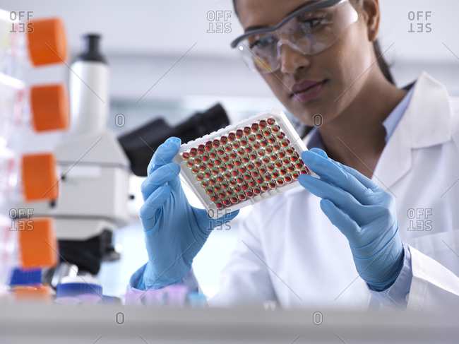 Female scientist preparing a multi well tray containing blood samples for clinical testing in the laboratory
