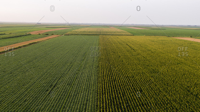 Serbia- Vojvodina- Aerial view of corn- wheat and soybean fields in the late summer afternoon