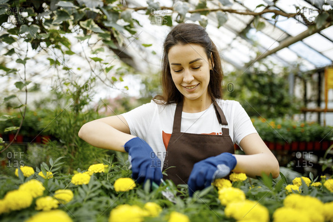 Young woman using garden clippers in a greenhouse