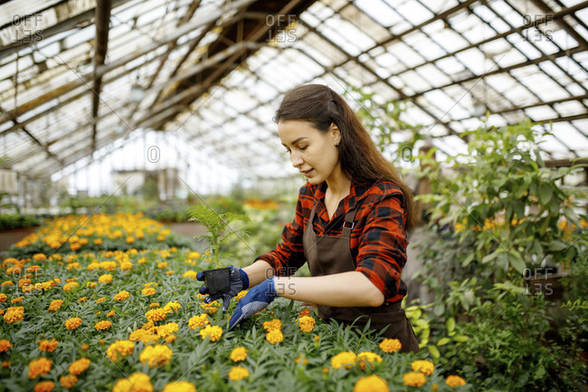 Woman wearing gloves working with flowers in a greenhouse