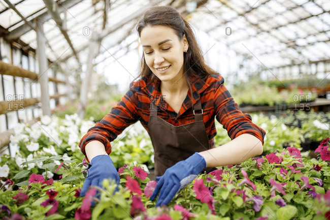 Woman working alone with flowers in a greenhouse