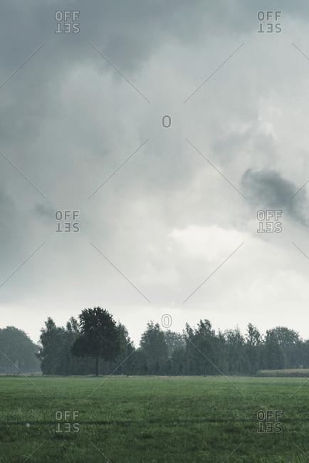 A field during rain