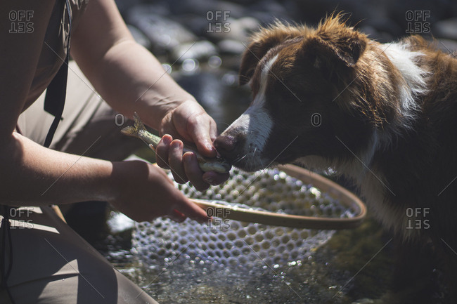 Fisherman holds caught trout to dog