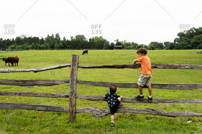 Two boys climbing on a fence while watching cows in a field