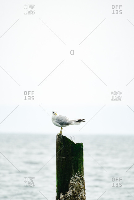 Seagull perched on wooden post at the beach