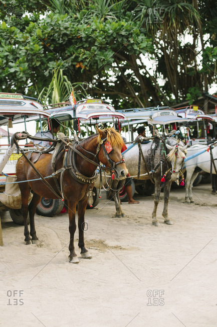 May 6, 2018- Gili Islands, Indonesia: Horse and carriage line up on the gili islands Indonesia
