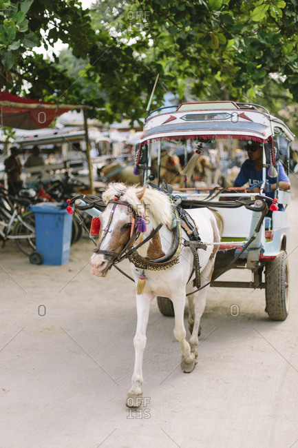 May 6, 2018- Gili Islands, Indonesia: Horse and carriage on the gili islands, Lombok Indonesia