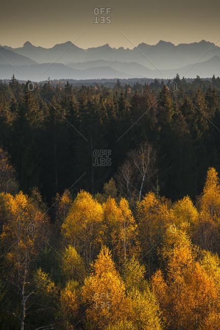 Europe, Germany, Bavaria, Munich, Perlacher Forst