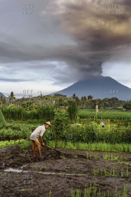 November 27, 2017: Peasant planting rice in field and volcano Agung in background.