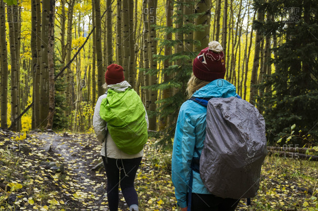 Two women hiking in aspen tree forest in autumn, Crested Butte, Colorado, USA