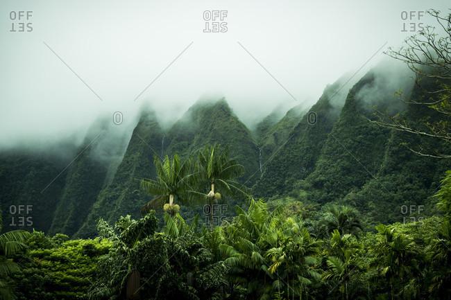 Tropical scenery, Kaneohe, Oahu, Hawaii Islands, USA