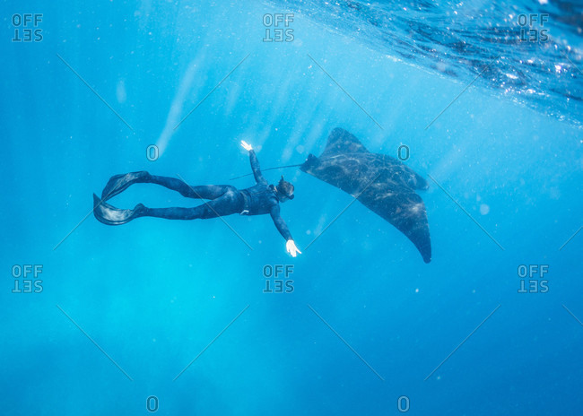 Underwater diver with manta ray fish