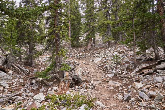Rocky mountainside in Great Basin National Park, Nevada