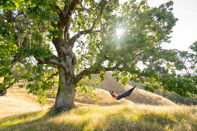 Man relaxes in a hammock hanging in a large oak tree on the coast of California