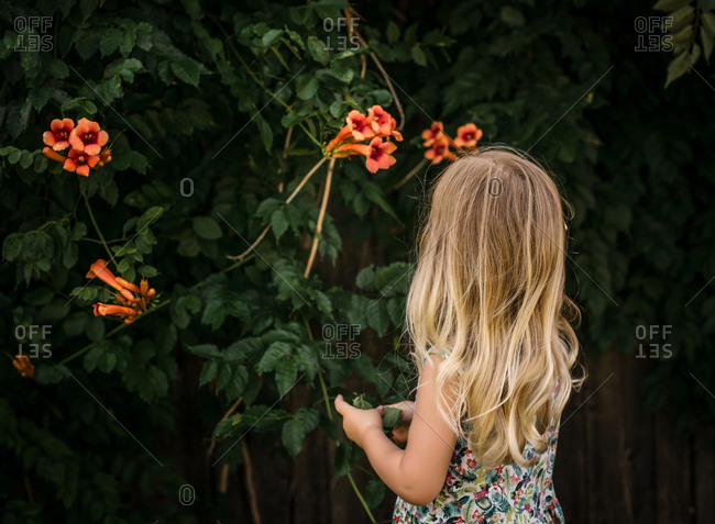 Rear view of blonde girl looking at orange flowers