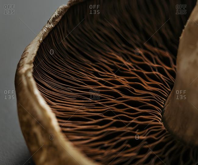 Gills of a portabella mushroom