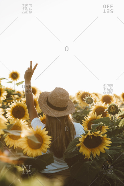 Back view of woman making peace sign standing in field of sunflowers