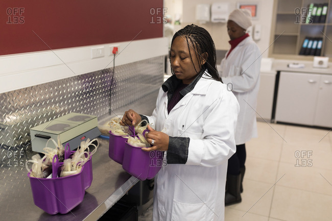 Laboratory technician analyzing blood bags in blood bank