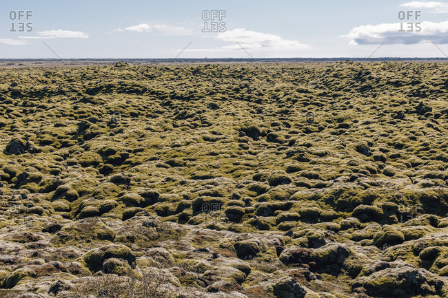 Moss field by Ring Road in Iceland
