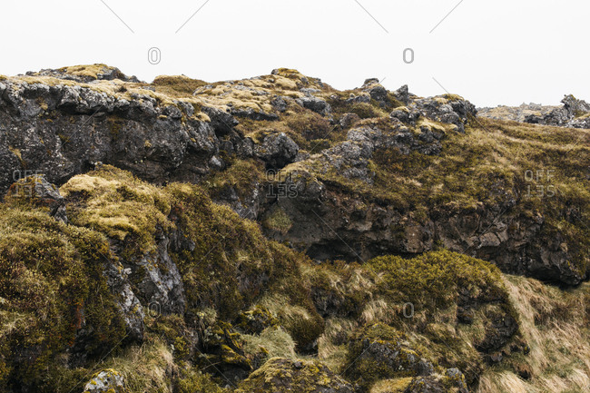 Lava field covered in moss in Budhir, west Iceland